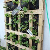 Vertikal jordbærbed på terrassen