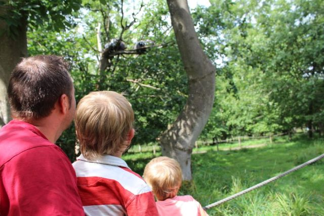 lemurer, knuthenborg-safaripark