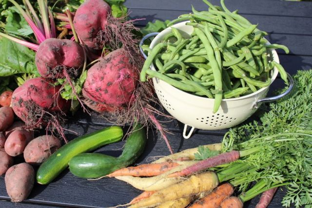 boenner, roedbeder, agurk, kartofler, squash
