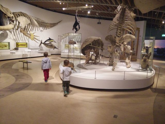 zoologisk-museum