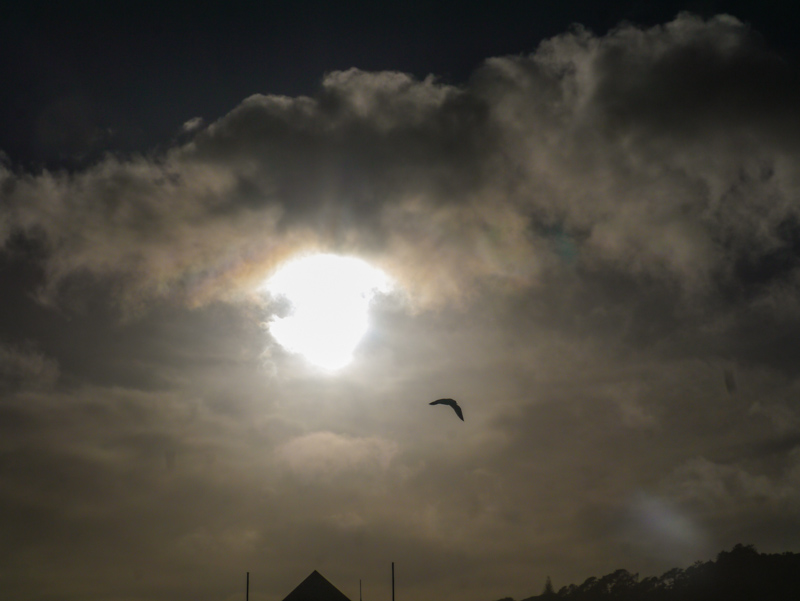 Sun, clouds and seagull. Muriwai beach