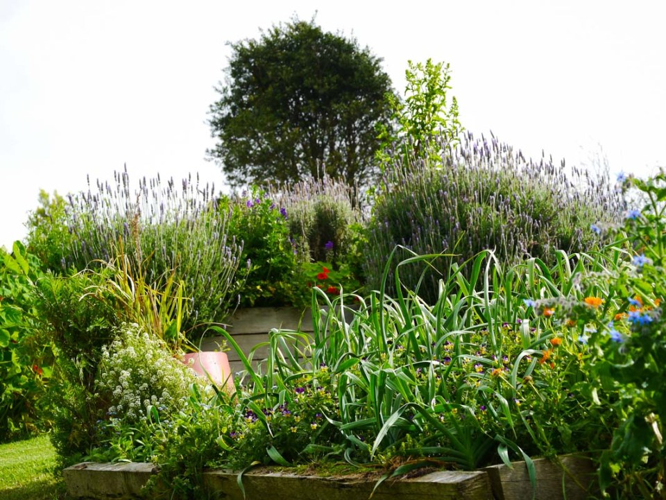 Garlic garden a total jumble of plants