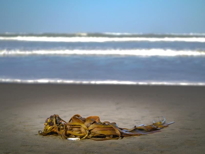 seaweed-1050654