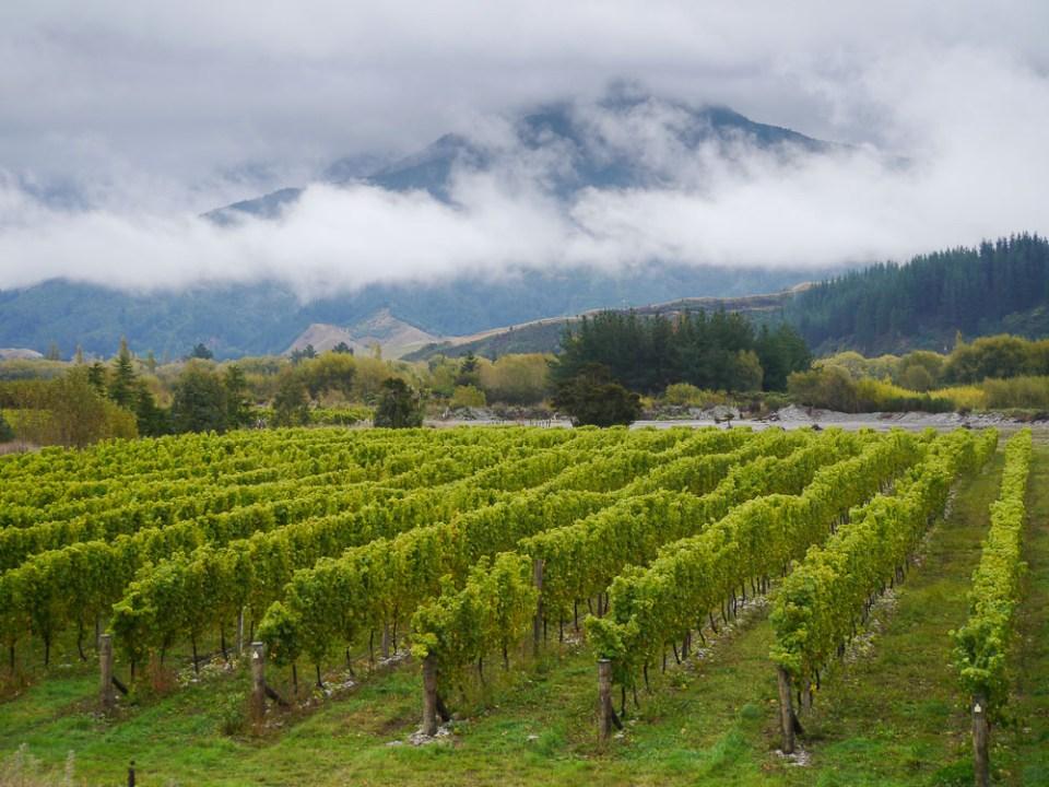 loddon lane vineyard