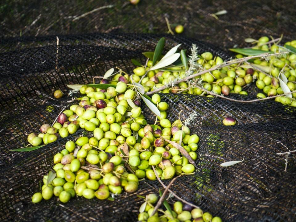 olives-1060659
