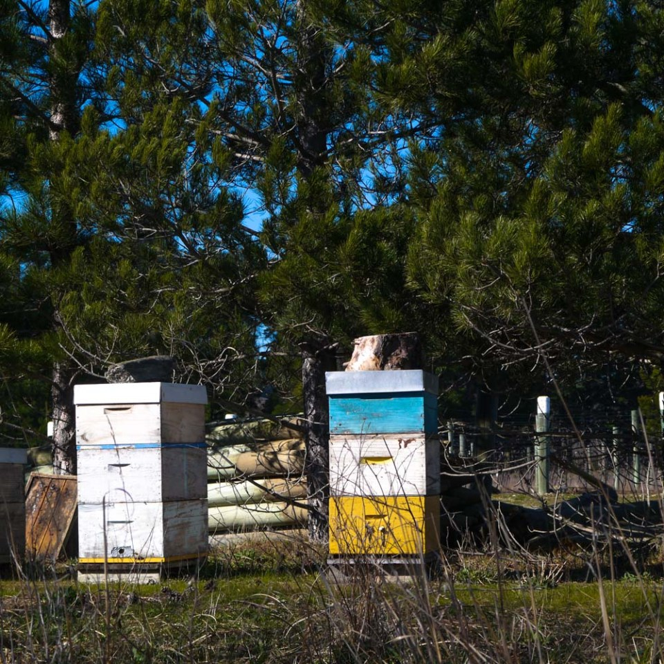 beehives-immigrants-vineyard-1080158