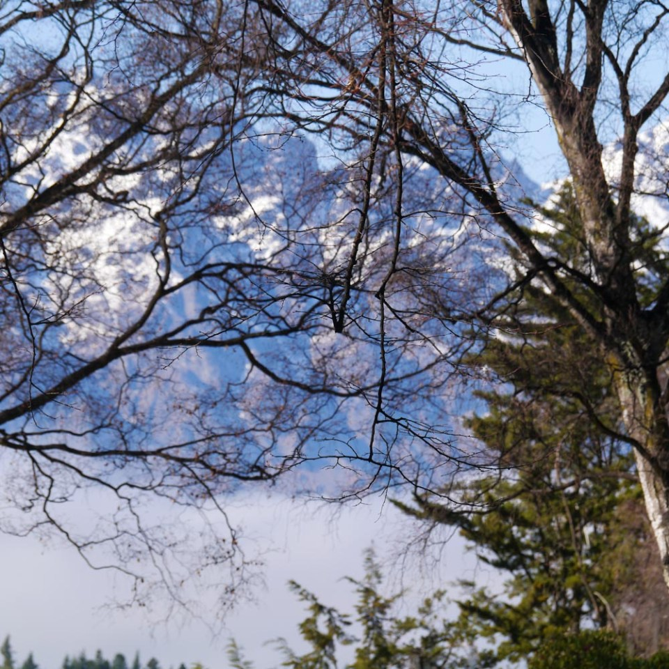 botanical-gardens-queenstown-1080295