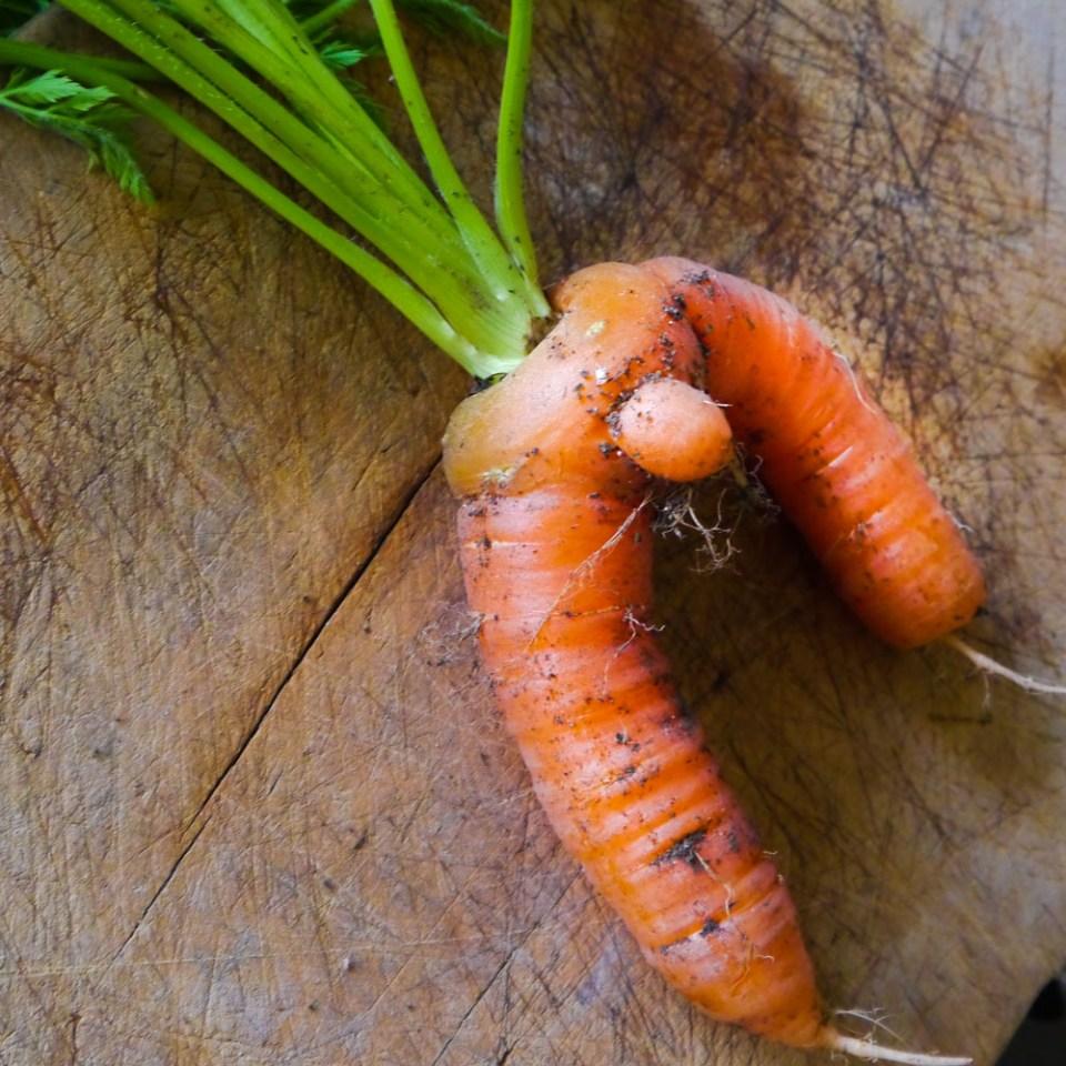 guy-carrot-1080806