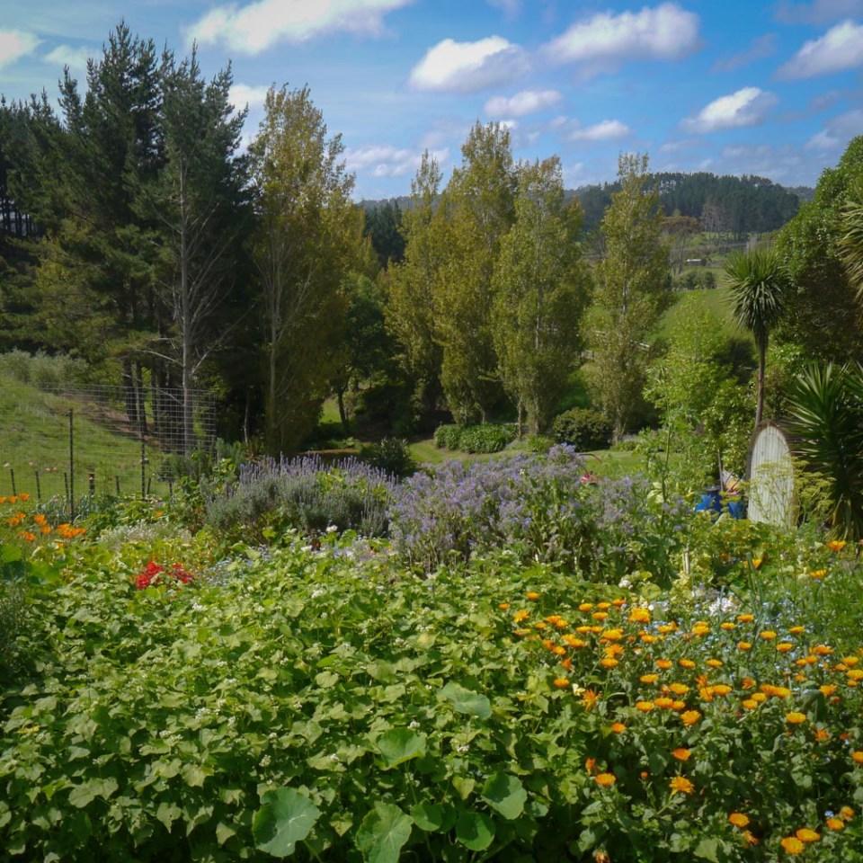 veg garden-1090078