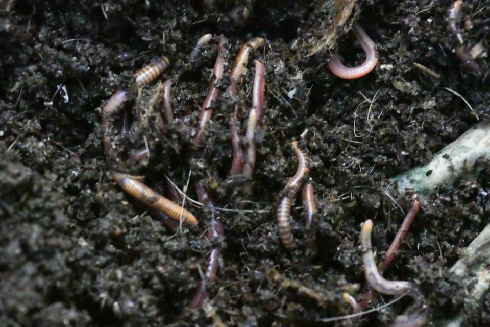 worms-1130723
