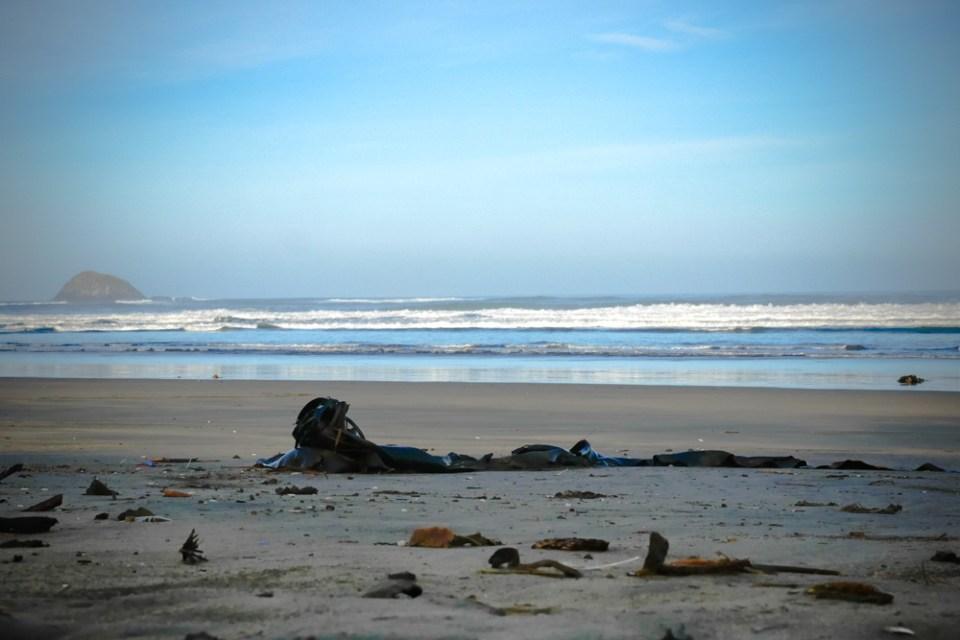 seaweed-1140235
