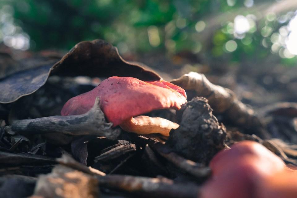 fungi-1140962