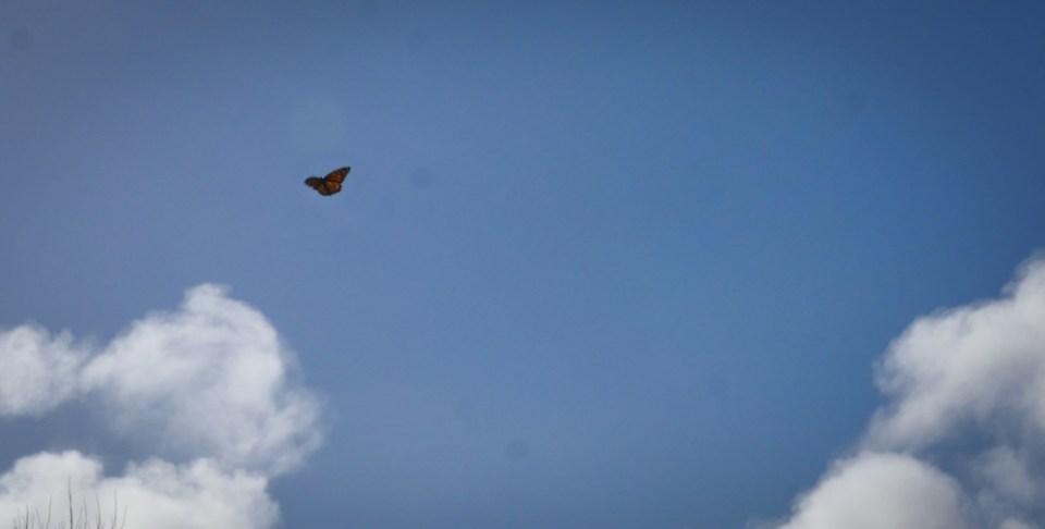 monarch-1150443