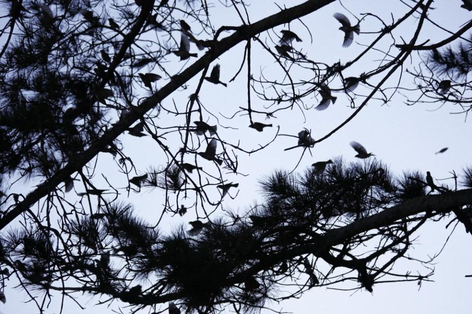sparrows-1150887