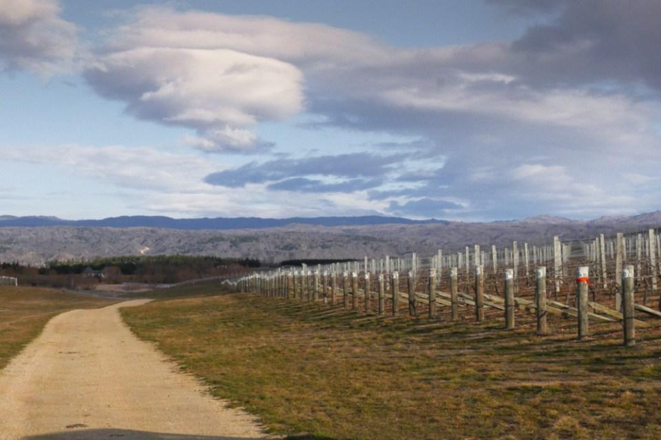 MacArthurs Ridge - Vines-1160779