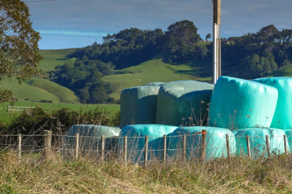 silage-1160502