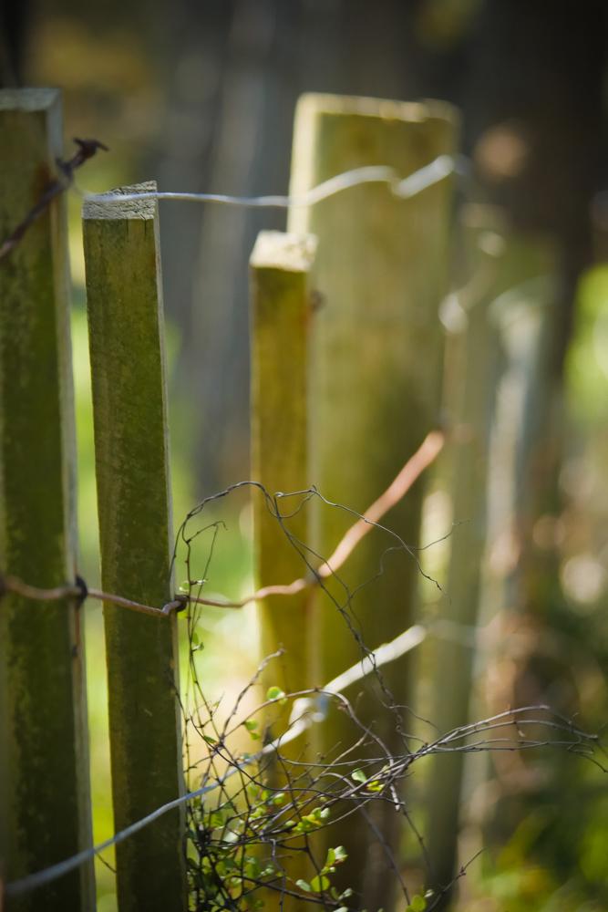 fences-1180607