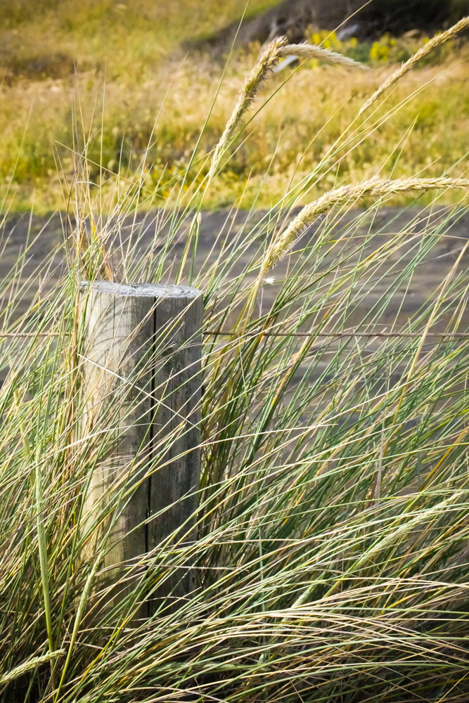 beach_grass-1190827