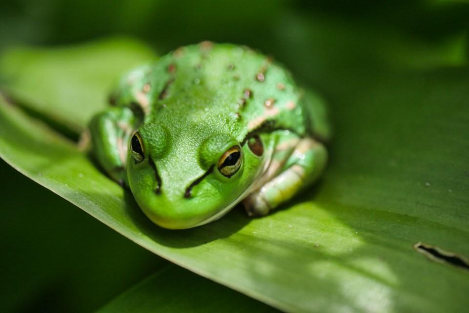 frog-1200101