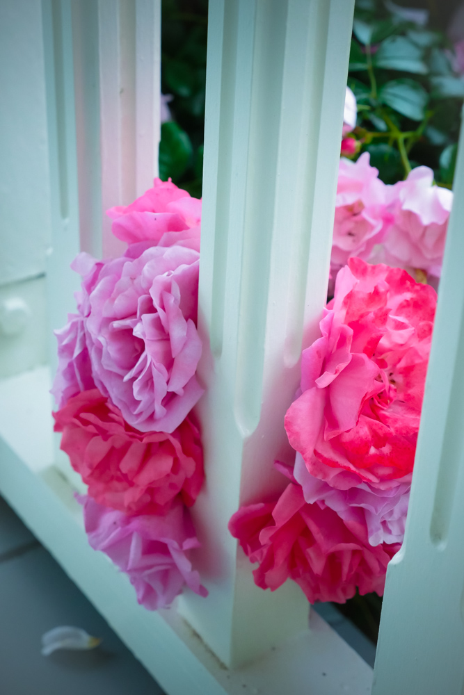 Roses-1200299