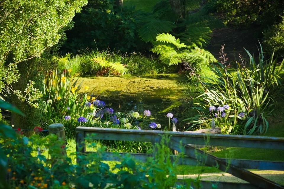 frog pond-1220075