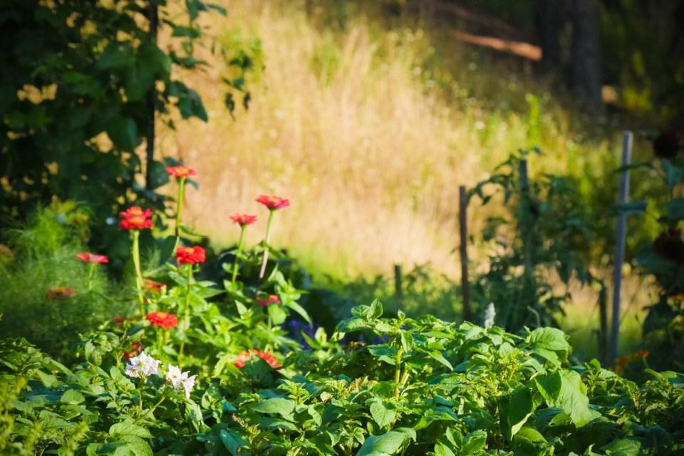 garden madness-1220673