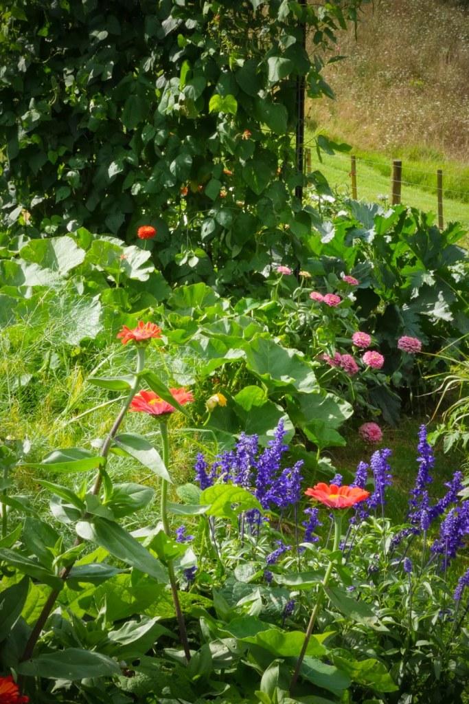 veg garden madenss-1220386