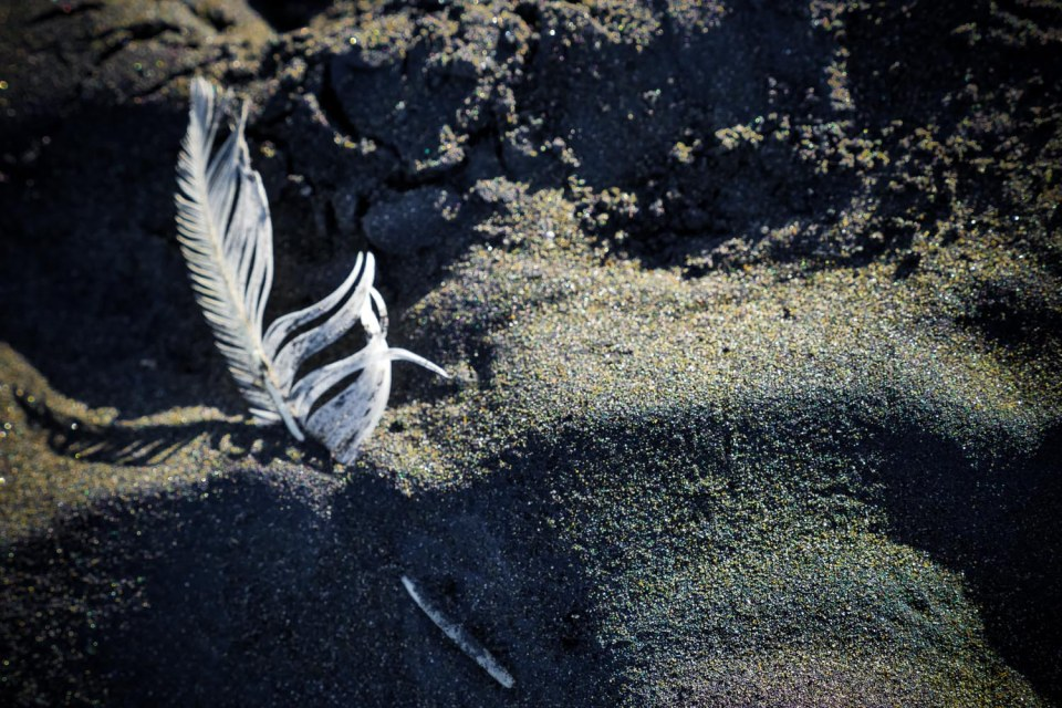 feather in black sand
