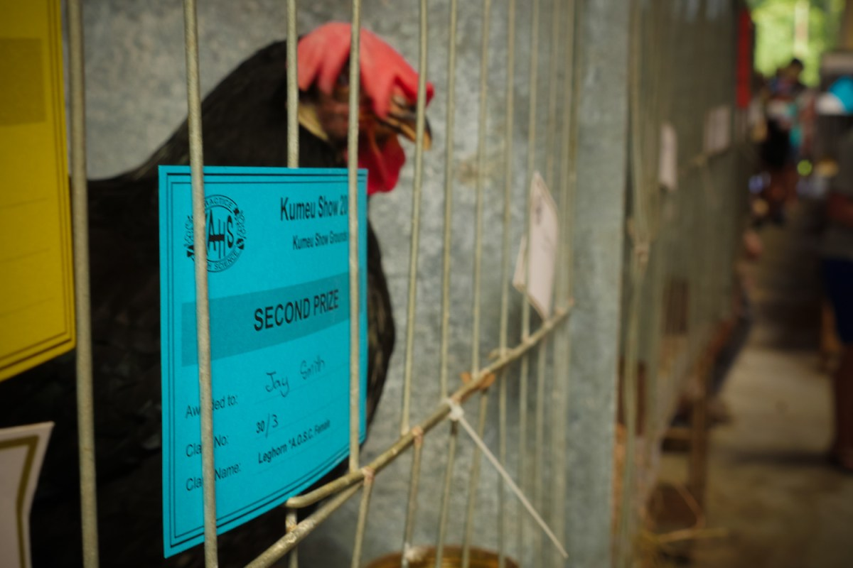Leghorn rooster Kumeu Show