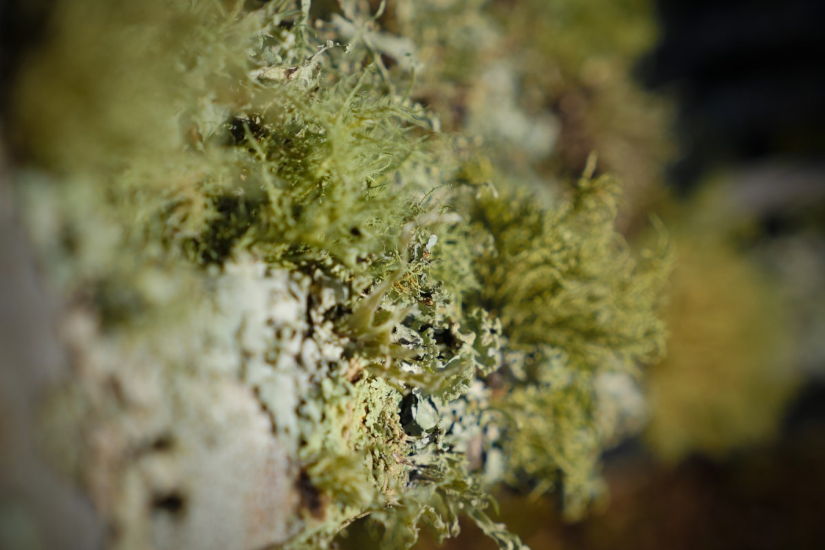 Lichen growing on chair outdoors