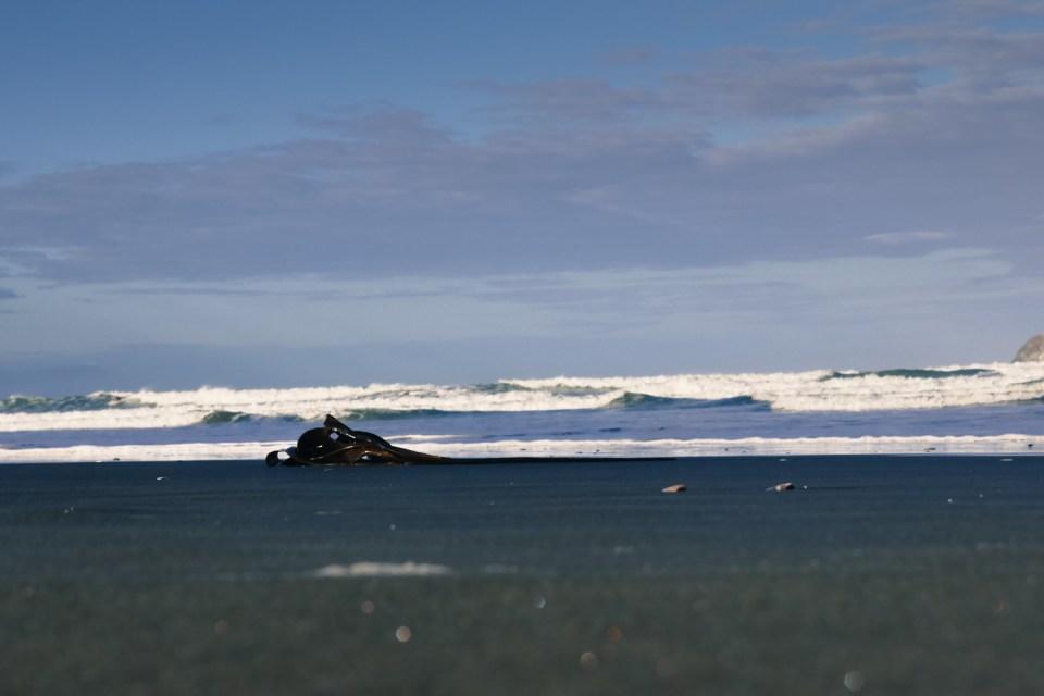 kelp on black sand