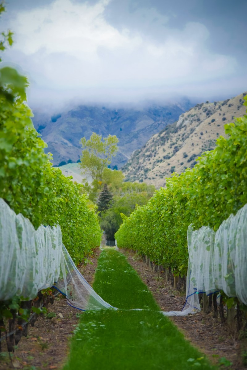 nets off time for harvest Marlborough