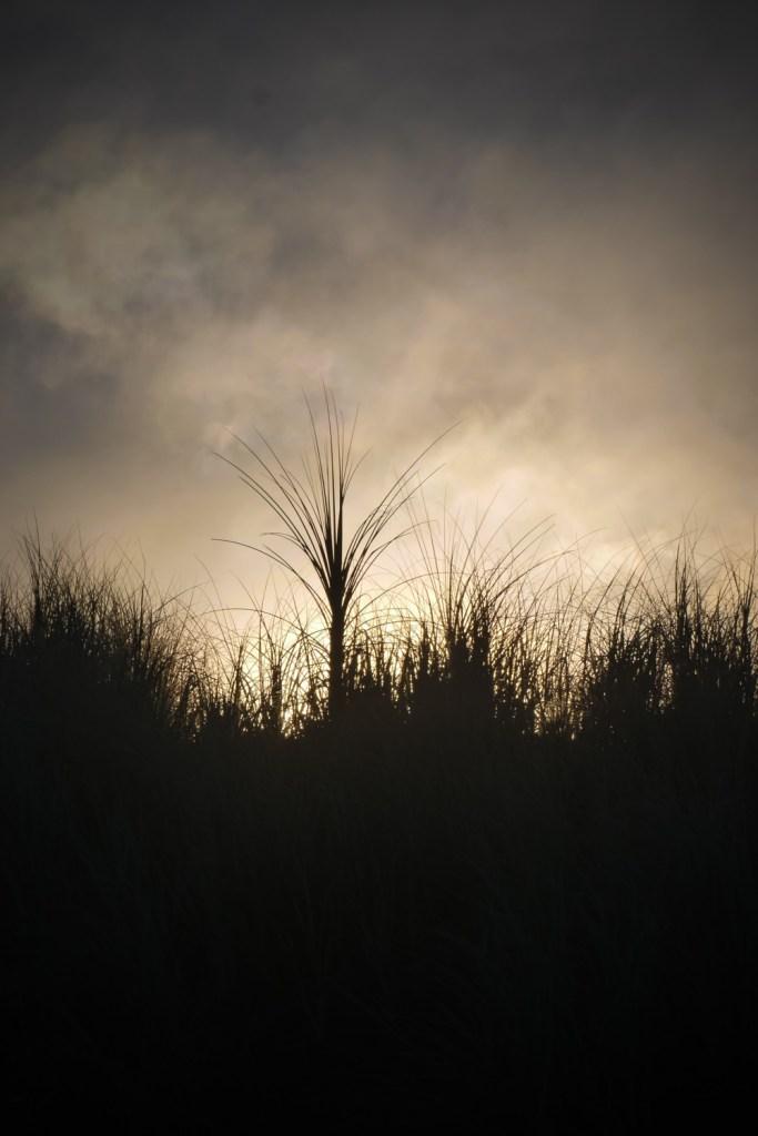sand dune magic-1250425