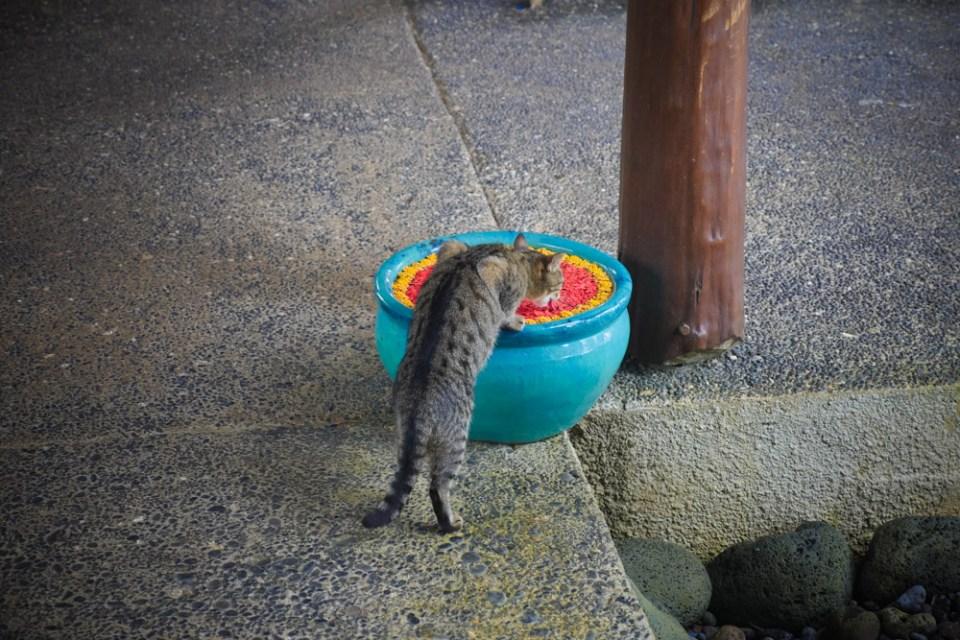 kitty-1260696