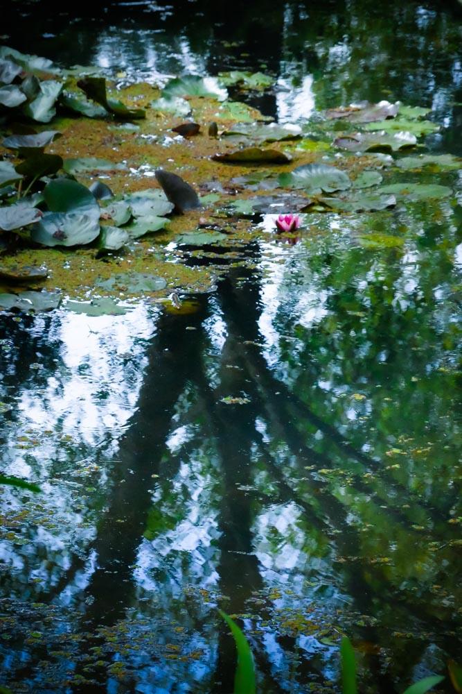 frog-pond-1280112
