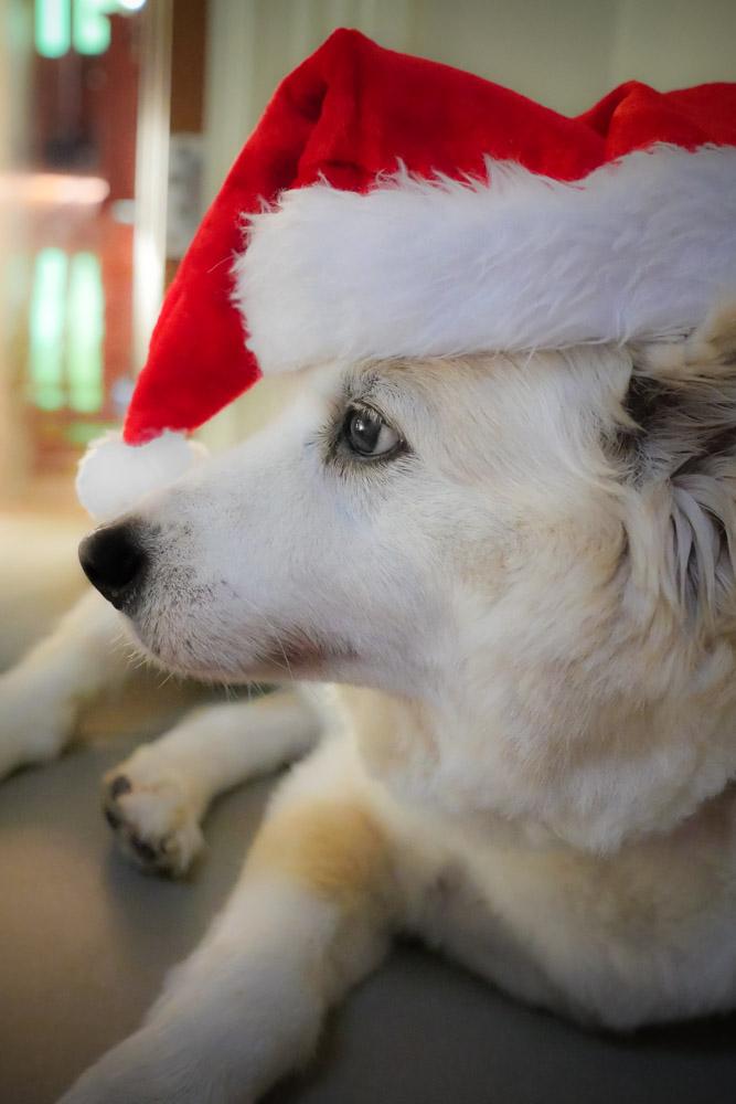 christmas-dan-1280973