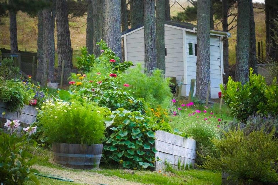 vegetable-garden-end-of-the-season-1290820