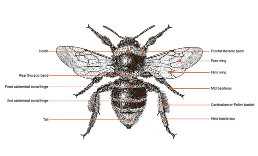 bumble bee diagram state for sequence detector evaluation frog went a courtin by john langstaff and illustrated picture
