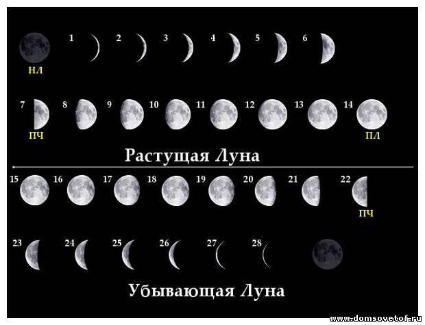 Луна и чистка печени  ,почек  ,желчного пузыря  ,кишечника ...