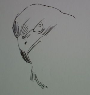 pen drawings eagle sketch line simple ink drawing oil without very allowing continue holding painting