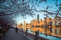 Strolling Roosevelt Island - Cherry Blossom Sunrise Skyline