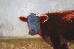 195502-10142344-Cow_portrait_in_field_JPG