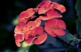 petal_face