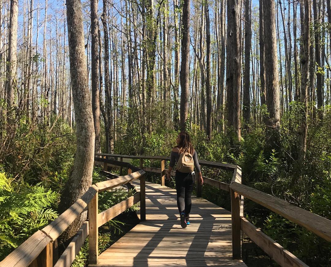 Orlando, FL: Being Surrounded by Hundreds of Alligators at Gatorland