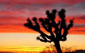 Josh sunset