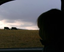 Ranch Pixie checking the herd.