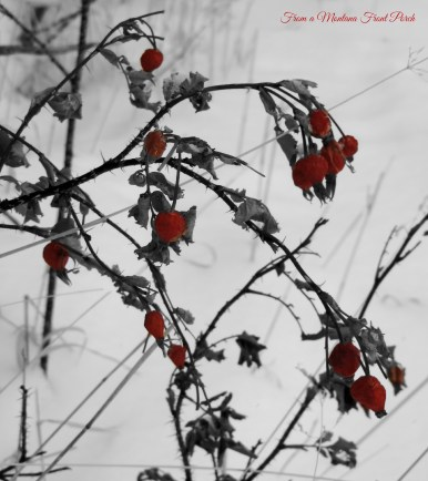 Winter Valentine ~ From a Montana Front Porch