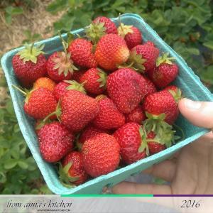 FAKfeatured-strawberrypicking1