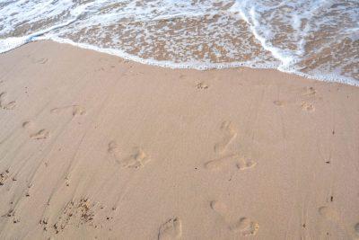 sable plage de calvi