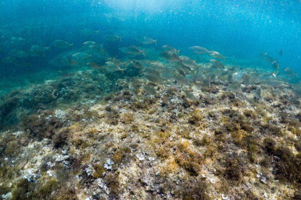 poissons-snorkeling-cap-dantibes